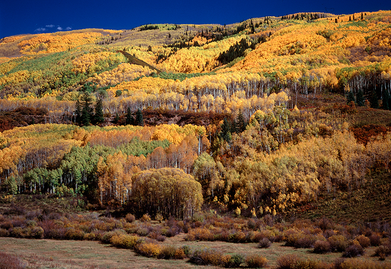 Autumn Aspen, Dallas Divide