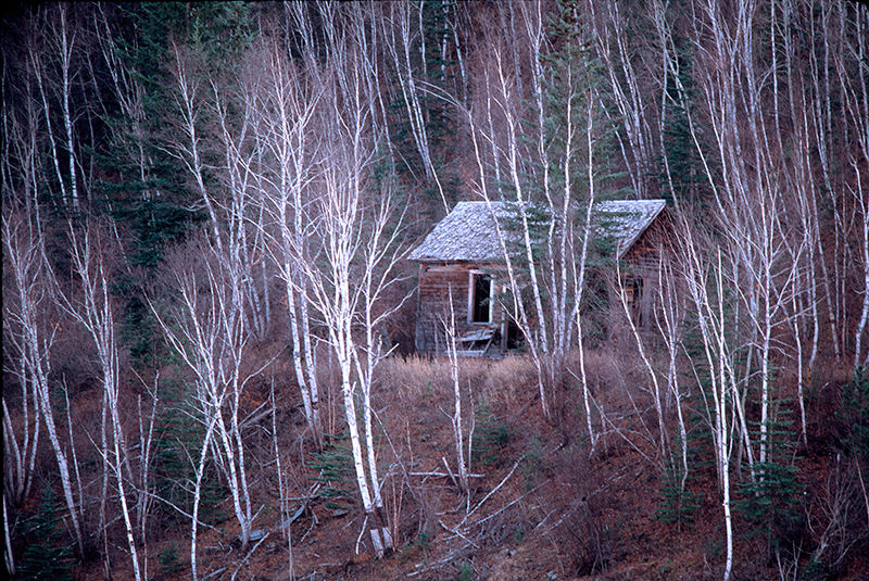 Cabin, Black Hills, South Dakota