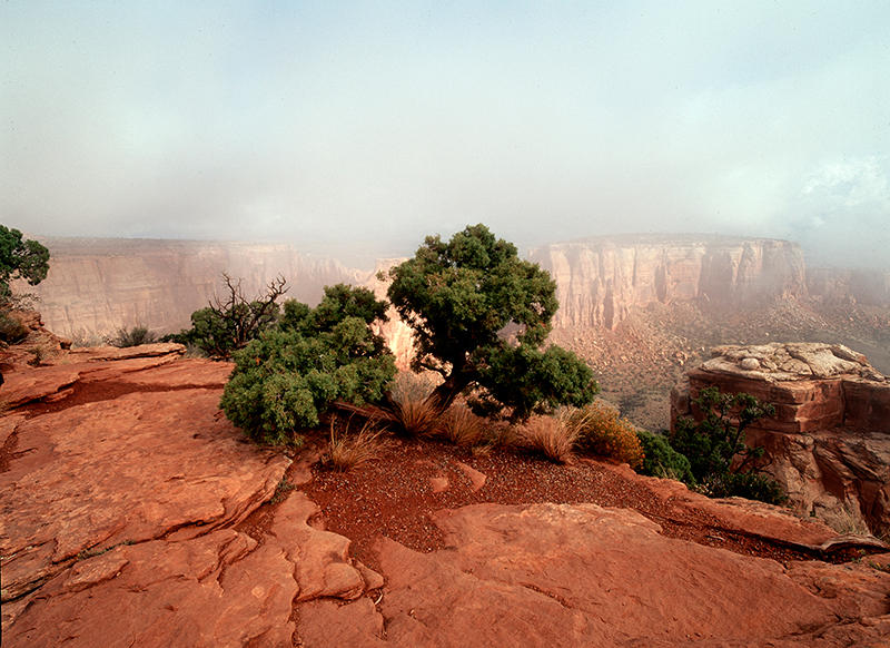 Sunrise, Juniper and Fog, Colorado National Monument #1