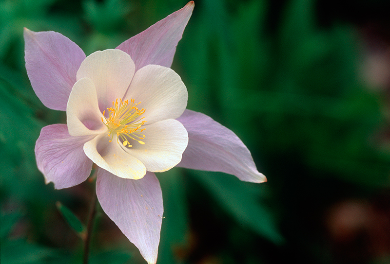 Columbine Colorado