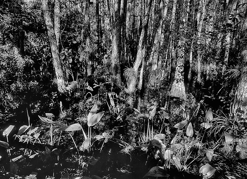 Audubon Corkscrew Swamp Sanctuary, Florida