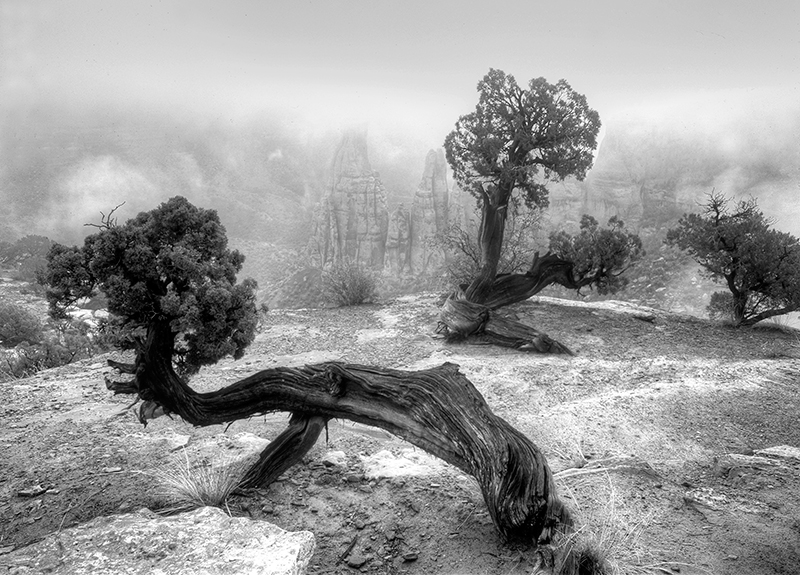 Juniper and Fog, Colorado National Monument