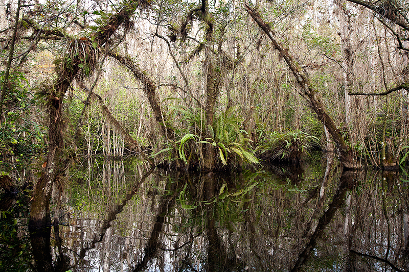 Big Cypress Swamp Florida
