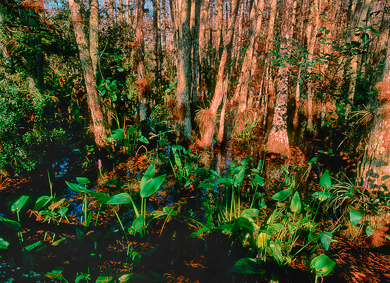 Audubon Corkscrew Swamp Sanctuary, Florida #1